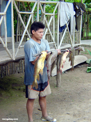 Villager Catfish